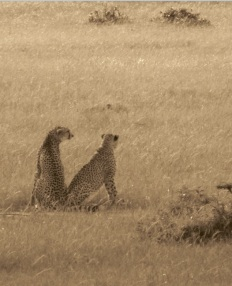 Nature (The Masai Mara)